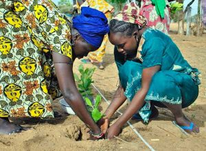 Daryn Fouther's picture of women planting in Senegal